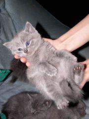 Вот такой котенок :))