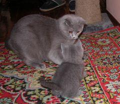 Мама, дочка и мышка