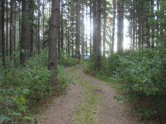 Дорога к лагерю